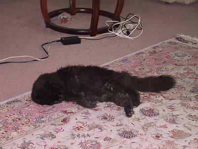 Blackcat aka Evil Twin