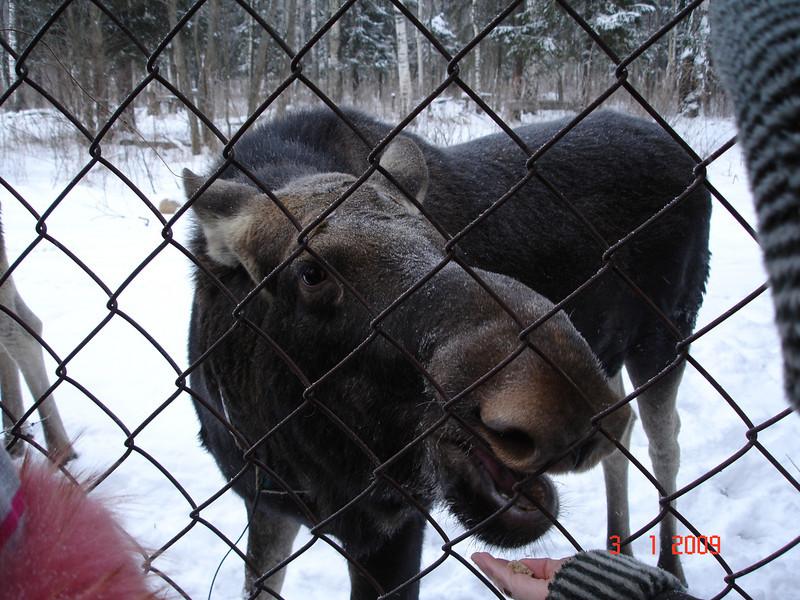 2008-12-31 НГ Кострома 64.JPG