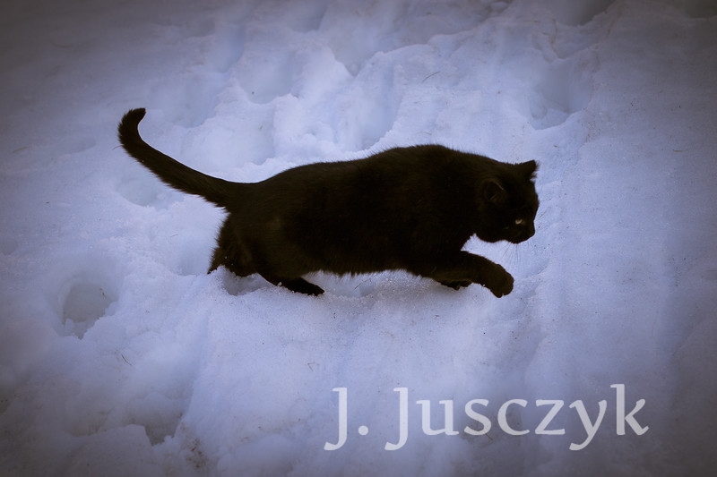 Jusczyk2021-4715.jpg