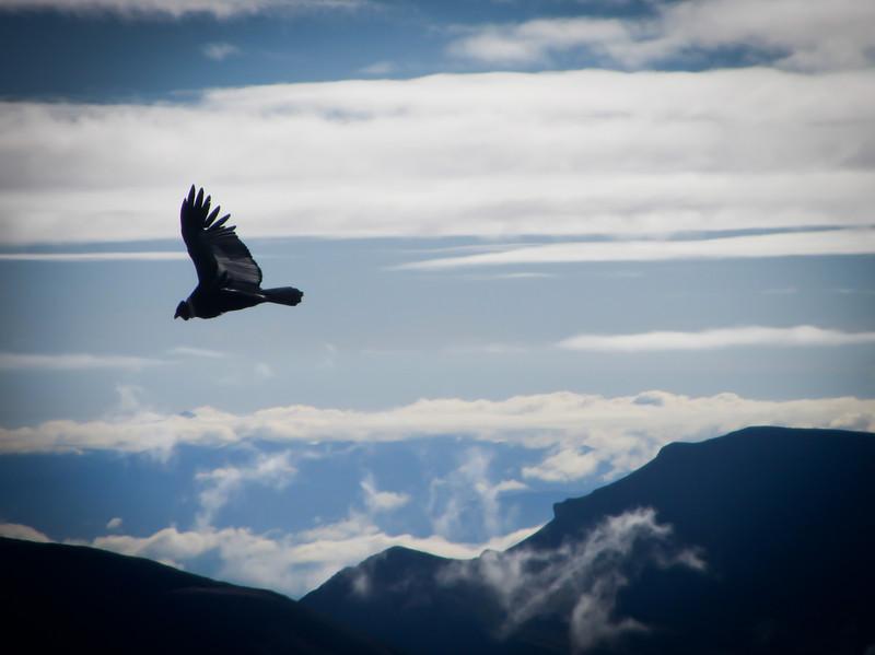 Tarija 201205 Valle de Los Condores (322e).jpg