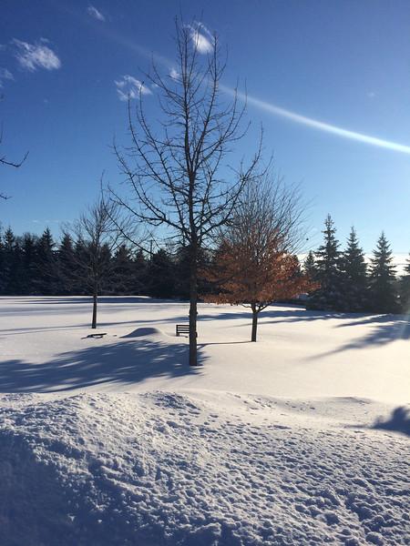 fantastic snow-4335.jpg