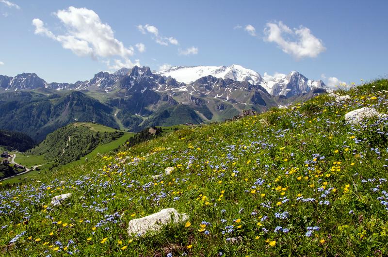 dolomite alpine wildflowers.jpg