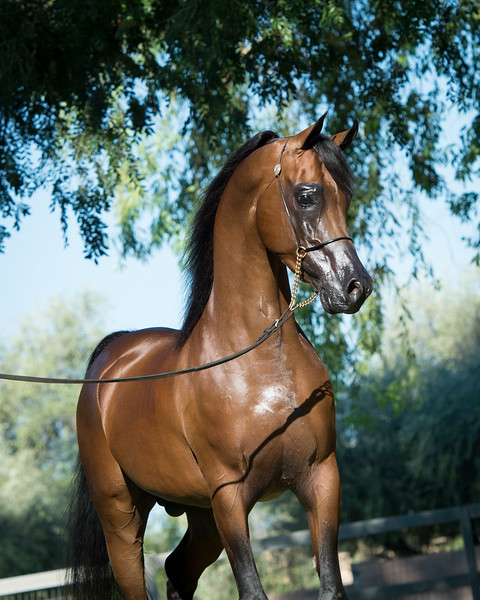 Sultan ORA-308.jpg