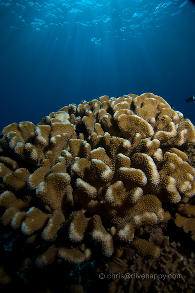 Banda Islands coral © Chris Mitchell