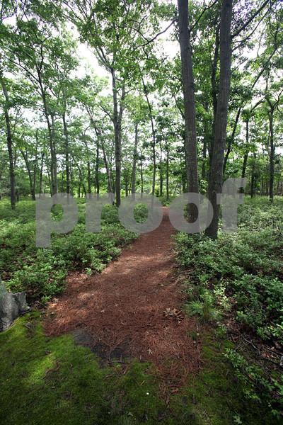 Back Woods.jpg
