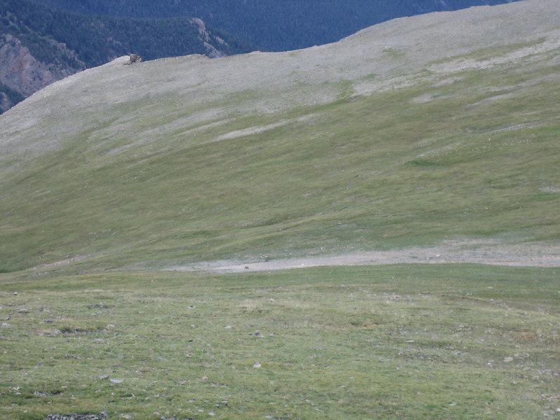 Tundra Trail at Rockcut, Rocky Mountain National Park, Colorado