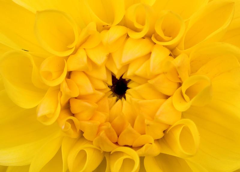 Macro Flowers 056-7.jpg