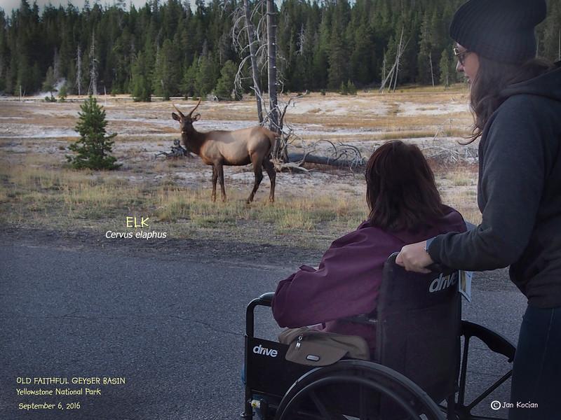 9.6.16 Elk & Cuca .jpg