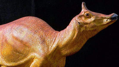 after-66-million-years-creature-wins-state-dinosaur-honor
