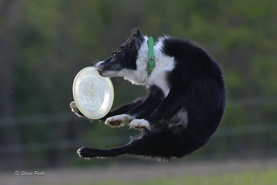Disc League May2021