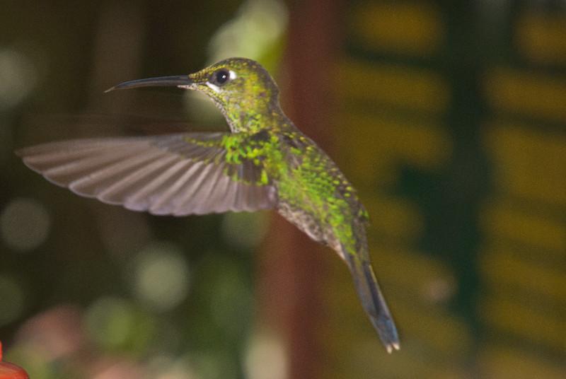 Costa Rica (135 of 104)