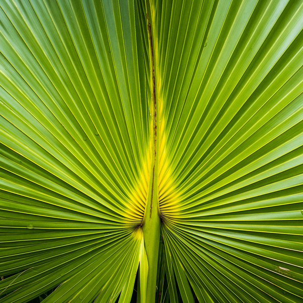 Palm Fronds Square