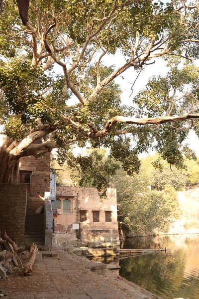 INDIA - 708.jpg