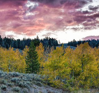 Yellowstone and Grand Tetons National Parks
