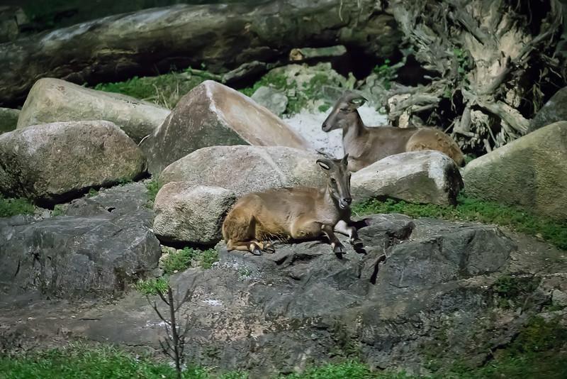 Night-Safari-9546.jpg