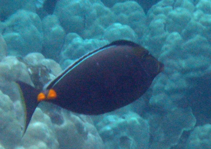 481- 20080416- Hawaii 20-Snorkelling IMG_0699.jpg