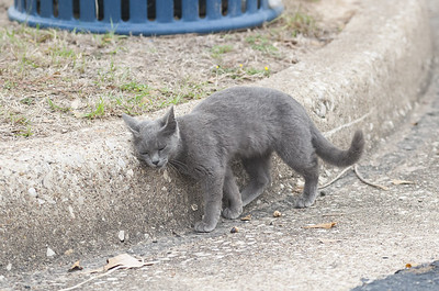the-adventures-of-john-tyler-high-schools-newest-furry-friend-sewer-cat