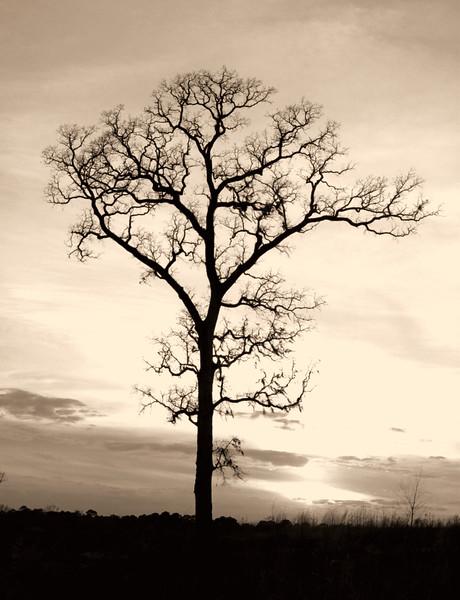 1994 eason lake treeScan-120526-0002.jpg