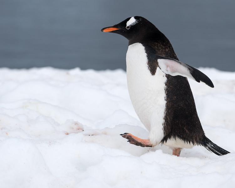 Antarctica-4683.jpg