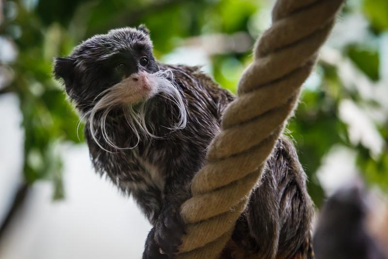 Zoo Korkeasaari