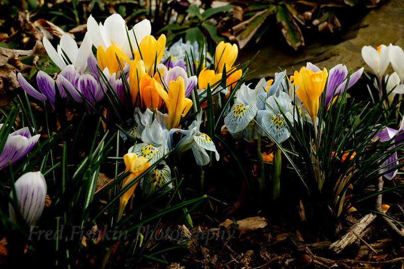 Sayen Spring.jpg