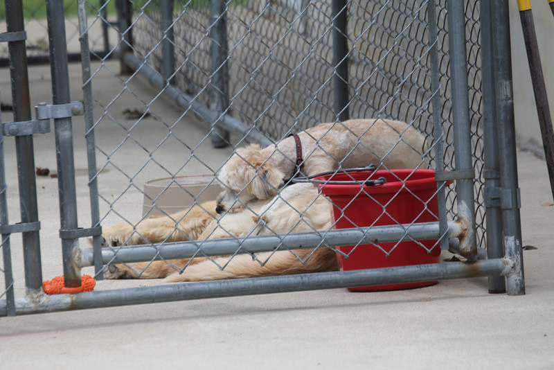 BB knows how to make the most of being put outside in the kennel