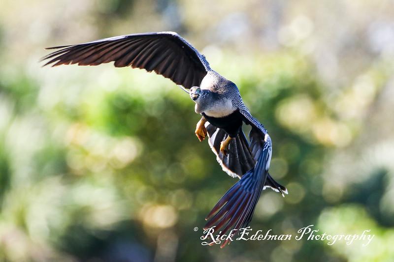 Florida Birds - 2020