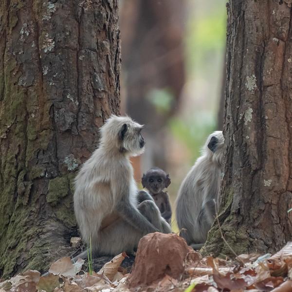 India_April_2019-1732.jpg