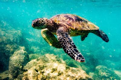 Maui - Wildlife