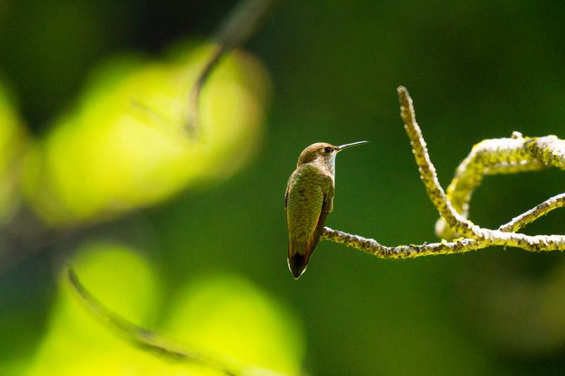 birds-1-11.jpg