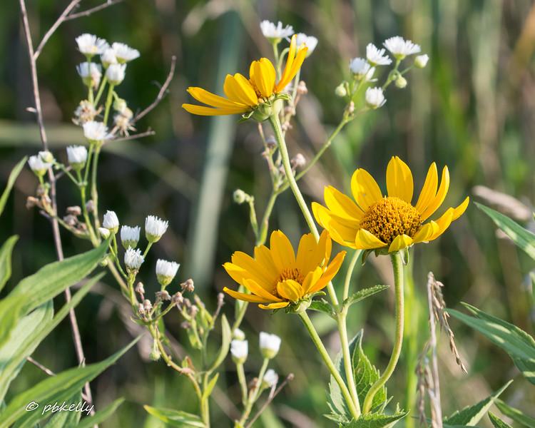 wildflowersl 071717.jpg