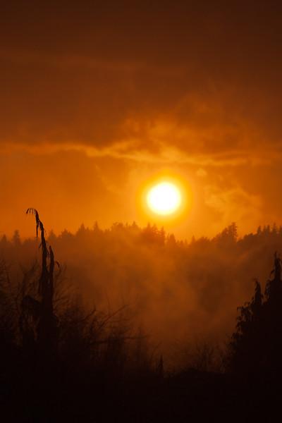 Woodinville Sunset