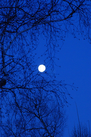 2010 11 23:  Early Morning Moon