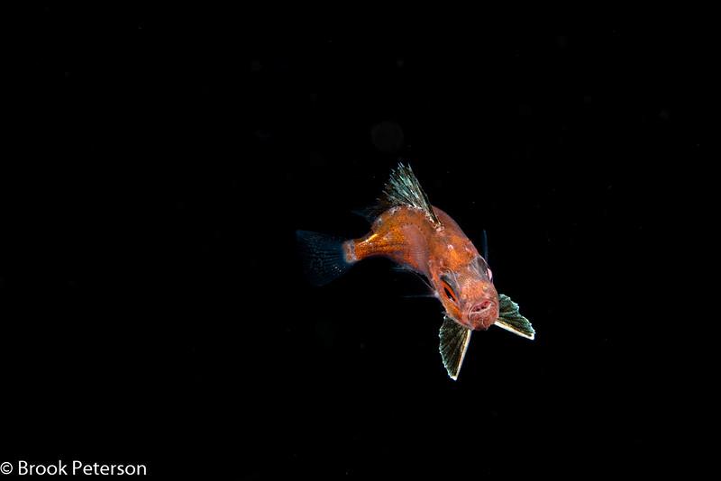 Blackwater Fish