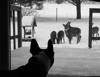 02-12-2010-deer