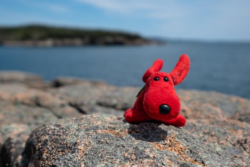 Rover, on the rocks along Ocean Path