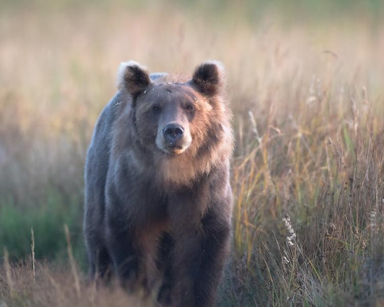 bear landscape.jpg