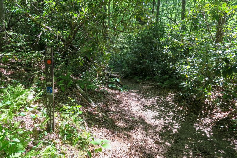 Bradley Creek/Squirrel Gap Trail Junction -- 2,560'