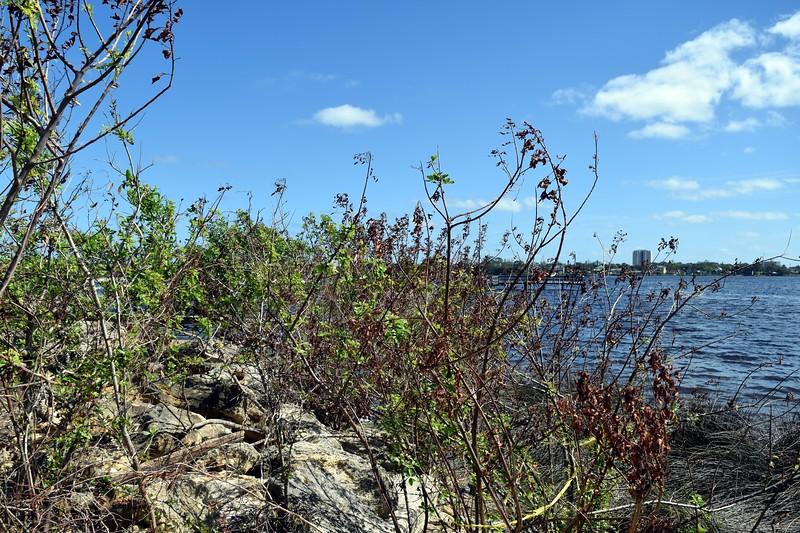 094a Halifax River 10-12-17.jpg