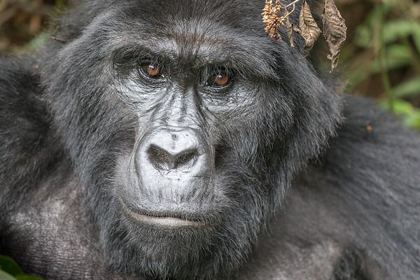 Uganda Safari 2018