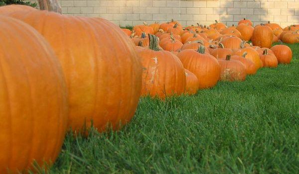 Autumn The Little Pumpkin Patch