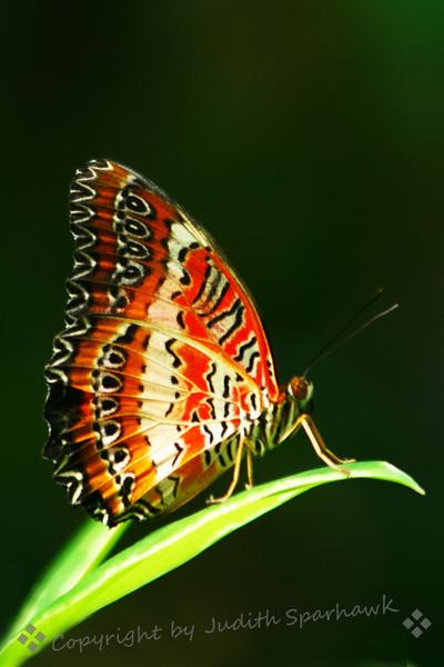 Butterfly Orange Spots.jpg