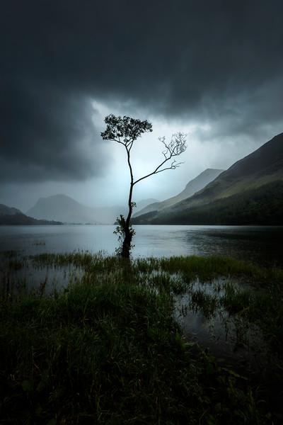Lake District Buttermere lone tree lake shower clouds.jpg