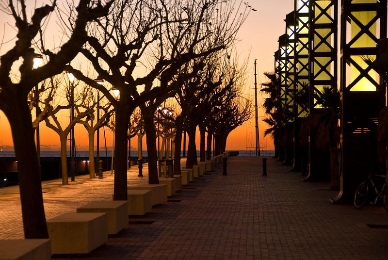 Trees at sunrise along the Carrer de la Marina in Barcelona. (Dec 12, 2007, 07:38am)