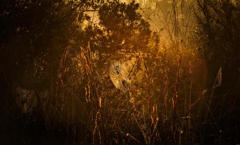 The Magic of Light-176.jpg