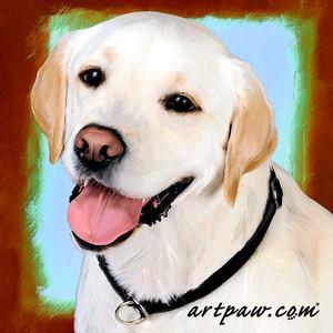 Dan The Dog