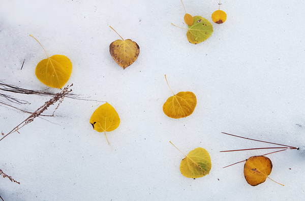 Winter & fall