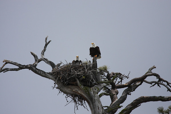 New Eagles 2008