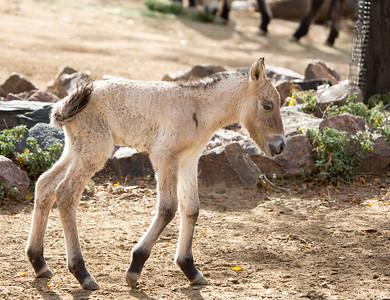 2015-10-30 Denver Zoo babies