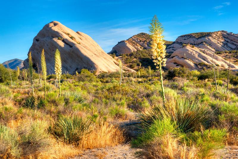 6797 Yucca